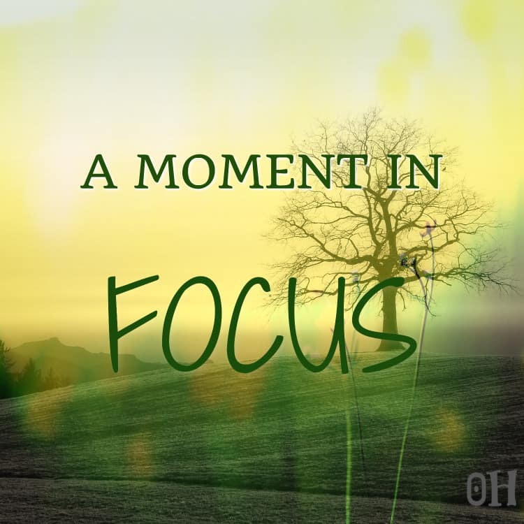 a moment in focus